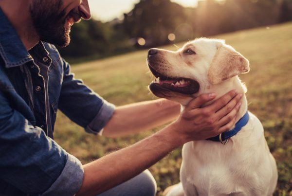 kutyatartás költségei